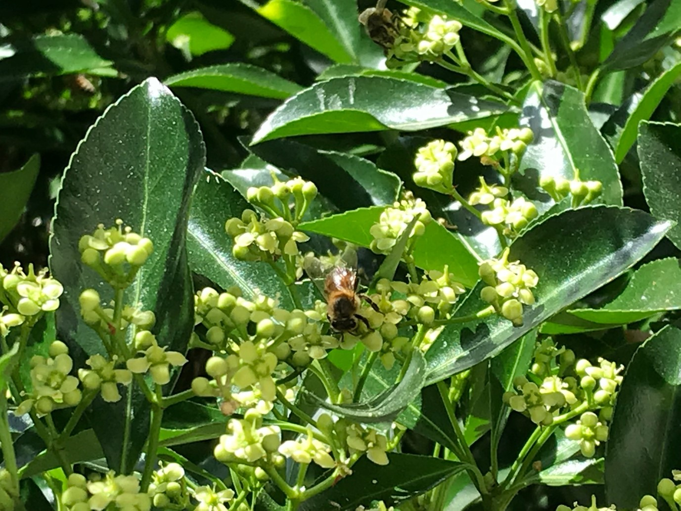 Pollination : A major contributor to biodiversity