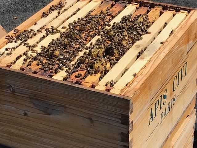Les abeilles et les ruches : Tout savoir sur la vie dans la ruche
