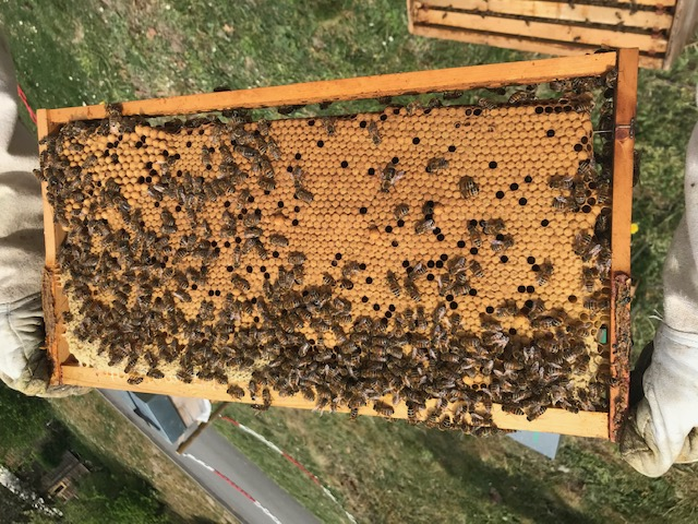 Hive products: 5 resources for a healthy life