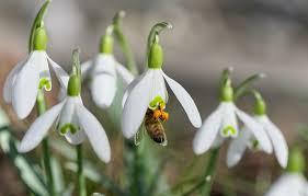 Les plantes mellifères et leur contribution à la reproduction des abeilles pour le miel de Paris