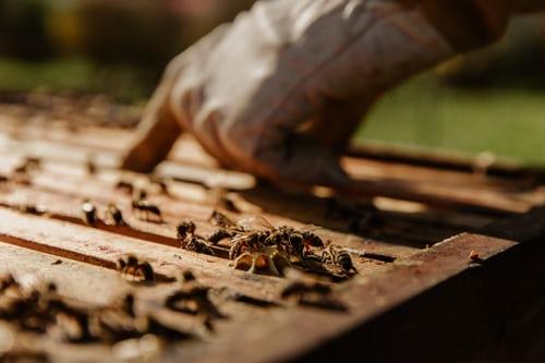 Quand meilleur miel de Paris rime avec apiculteur engagé
