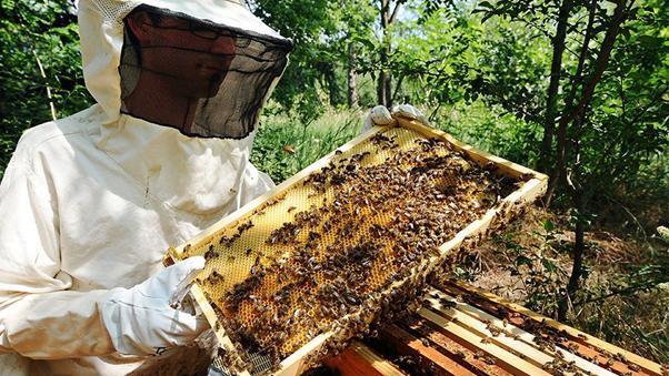 Apiculteur et abeilles