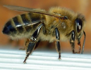 Bees and hives: everything you need to know