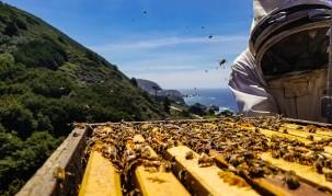 Comment se déroule la récolte du miel durant l'été ?