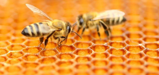 Comment être incollable sur les abeilles et les ruches